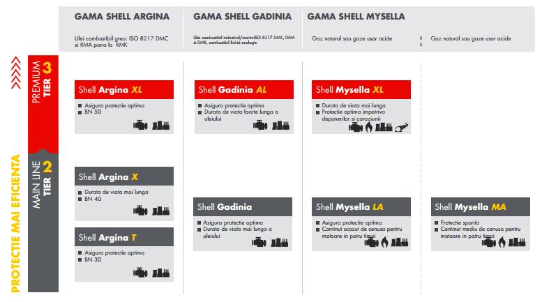 shell-argina-shell-gadina-shell-mysella