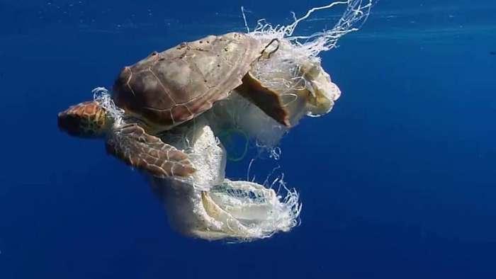 3 moduri in care poluarea cu plastic afecteaza animalele de uscat si apa